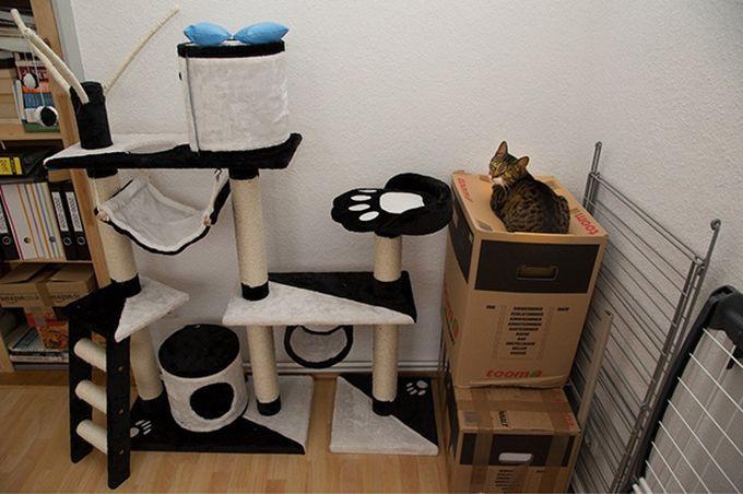 Картинки по запросу Забавные примеры железной кошачьей логики