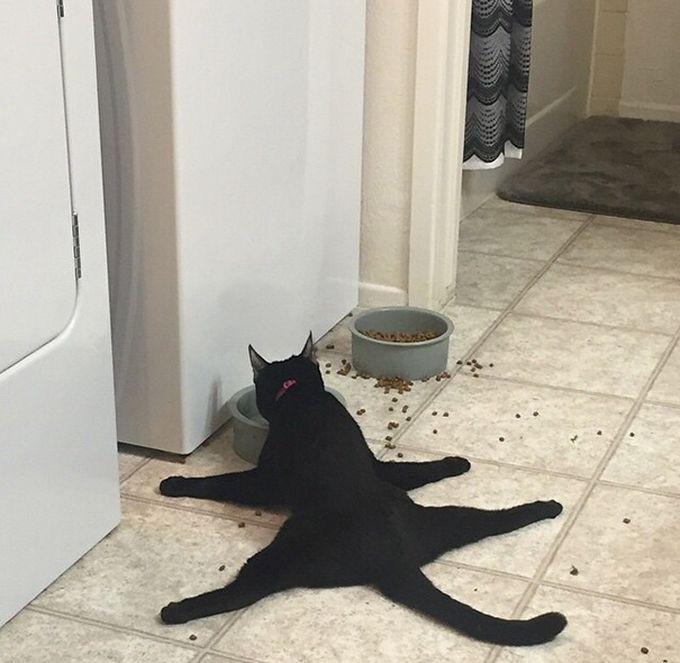 2. «Как мне надоели эти ваши низкие миски!» животные, кошка, логика