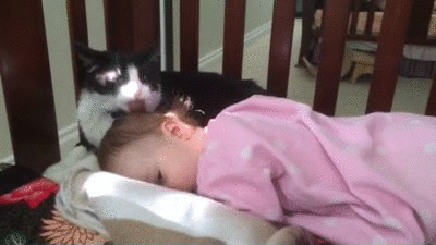 2. Они милые, пусть и слегка игривые, приятели для сна