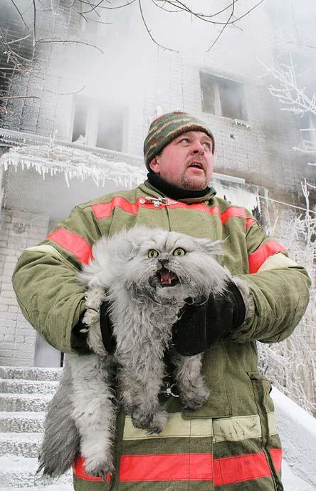 19. На улице холодно. Возьму с собой своего ручного йети. животные, коты, милота, огромные коты