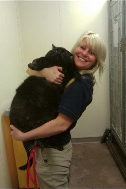 4. Такой тушке сложно удобно устроиться на руках! животные, коты, милота, огромные коты