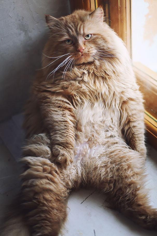 10. Он явно чем-то недоволен животные, коты, милота, огромные коты