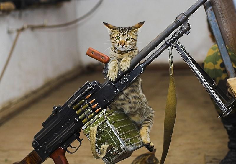 Картинки стреляющего кота