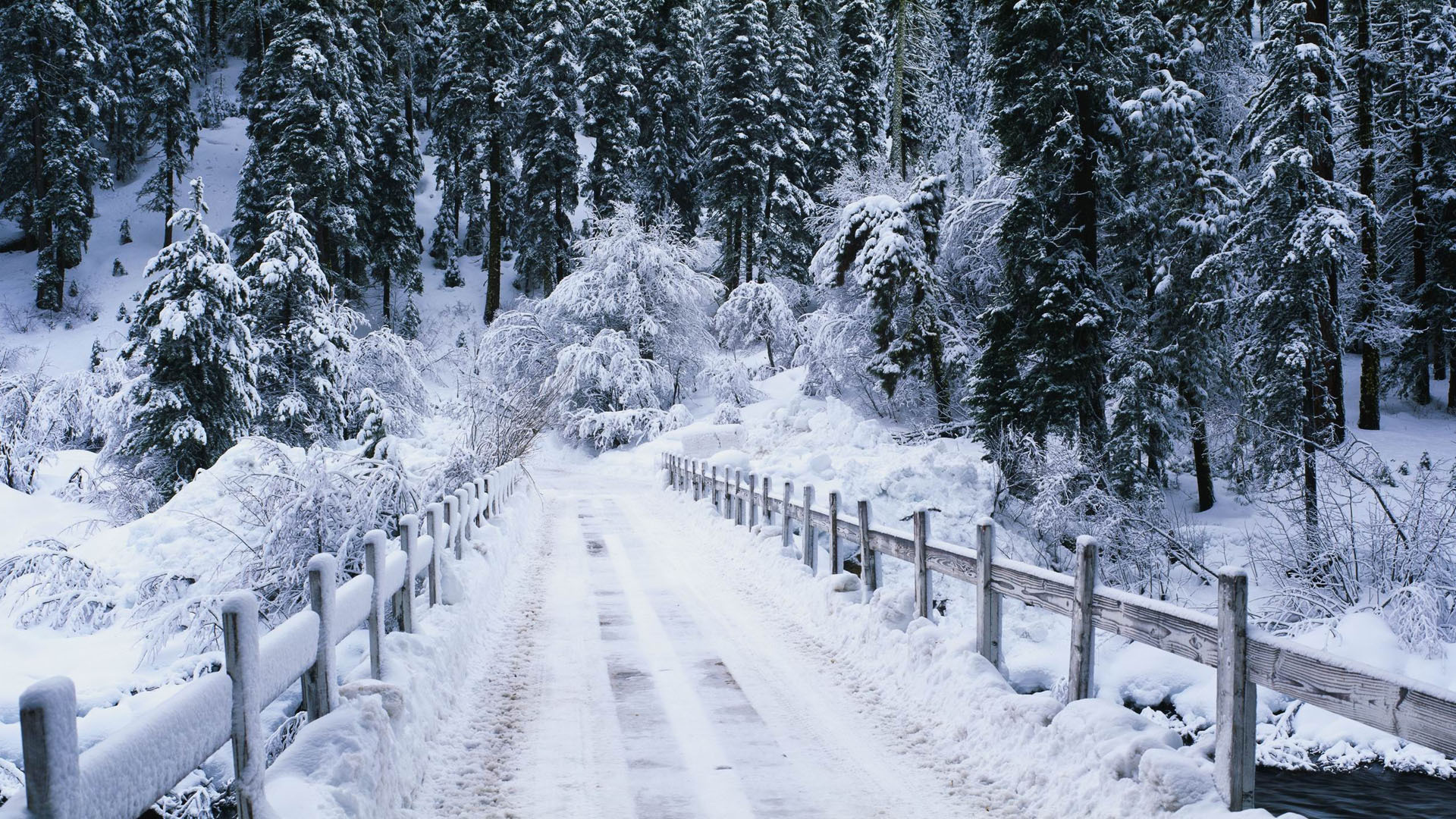 дорога снег лес зима без регистрации