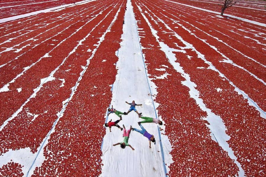 11. Дети-рабочие среди полей сушёных томатов, Маниса, Турция. без фотошопа, удивительные фотографии