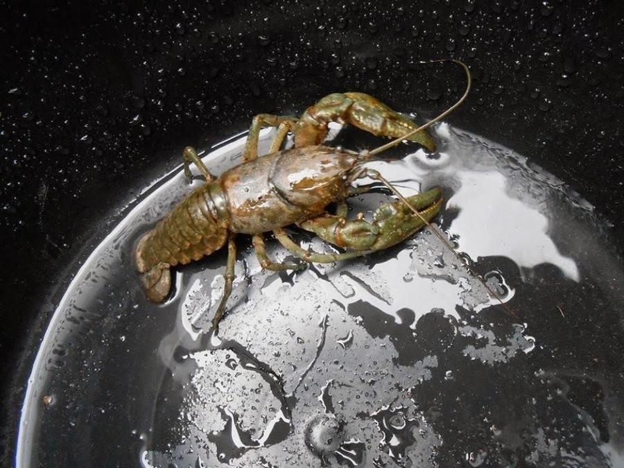 3. Это не инопланетный монстр, захватывающий Землю, это всего лишь рак в ведре. без фотошопа, удивительные фотографии