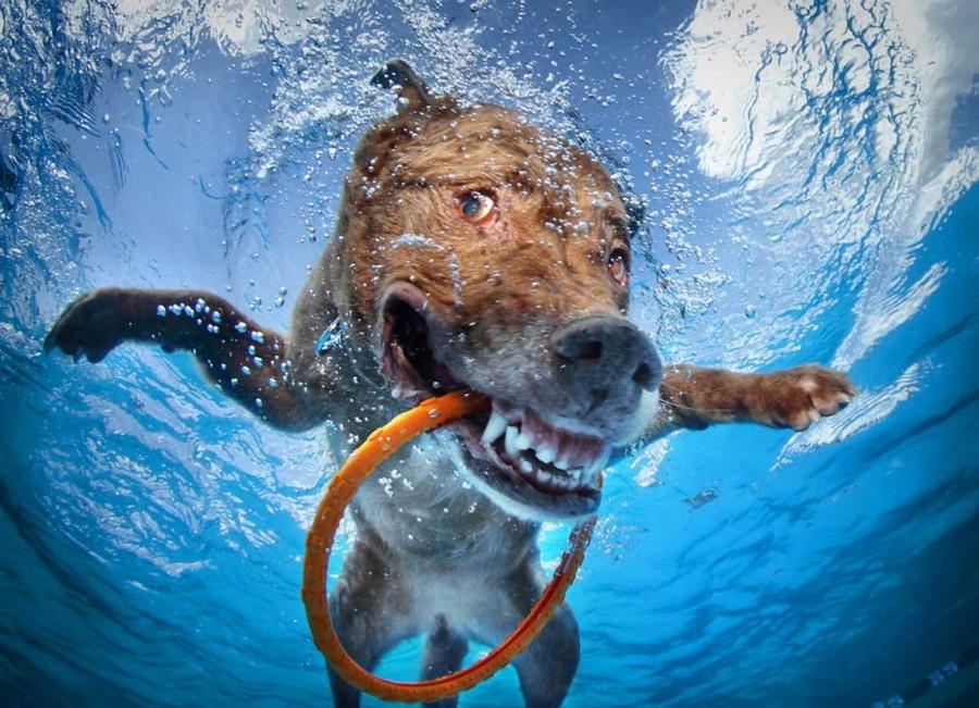 24. Обычная собака, нырнувшая в воду. без фотошопа, удивительные фотографии