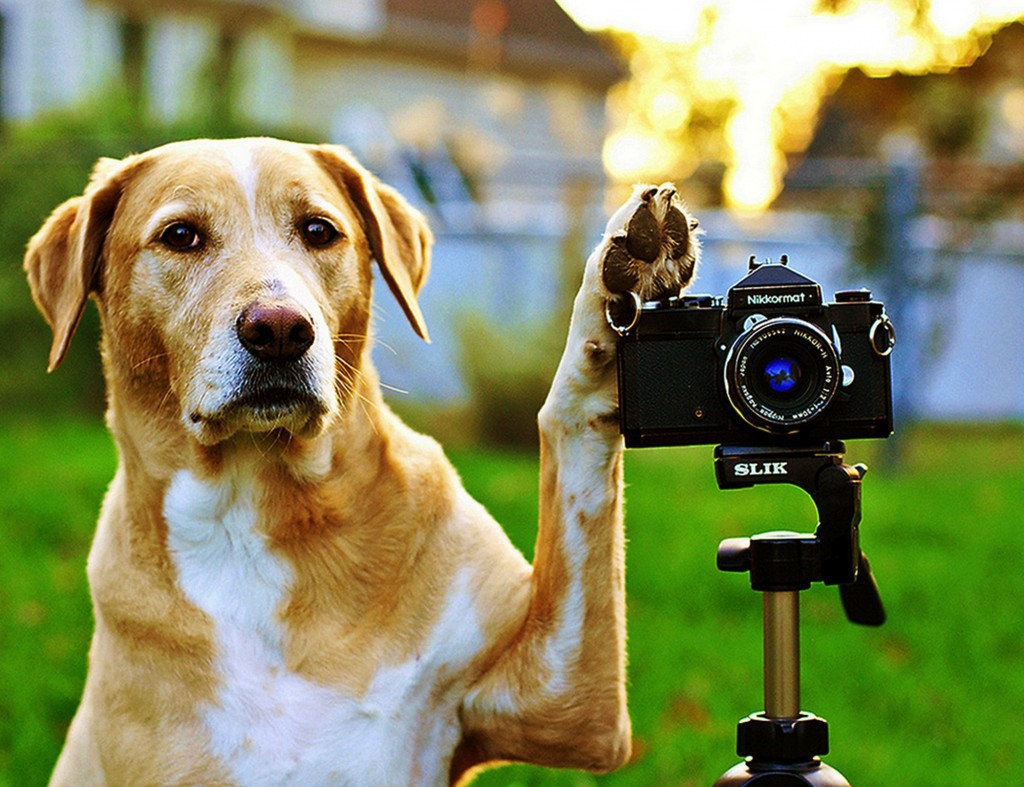 редко как правильно фотографировать животных недавних