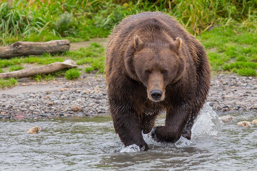 Голосовые поздравления от медведева оригинальности