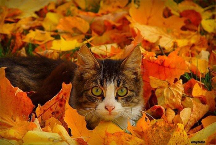 Картинки по запросу осень красивая