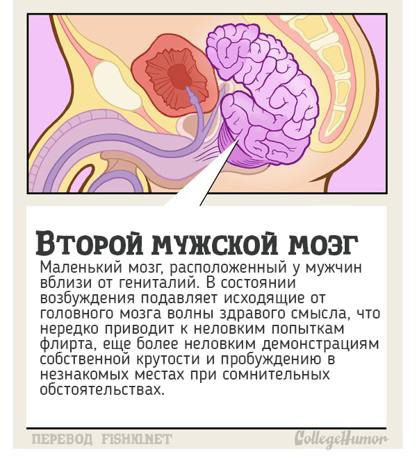 10 тайных органов человеческого тела, о которых вы и не подозревали органы, человеческое тело, юмор