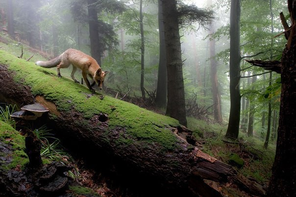 Картинки по запросу Хранители леса