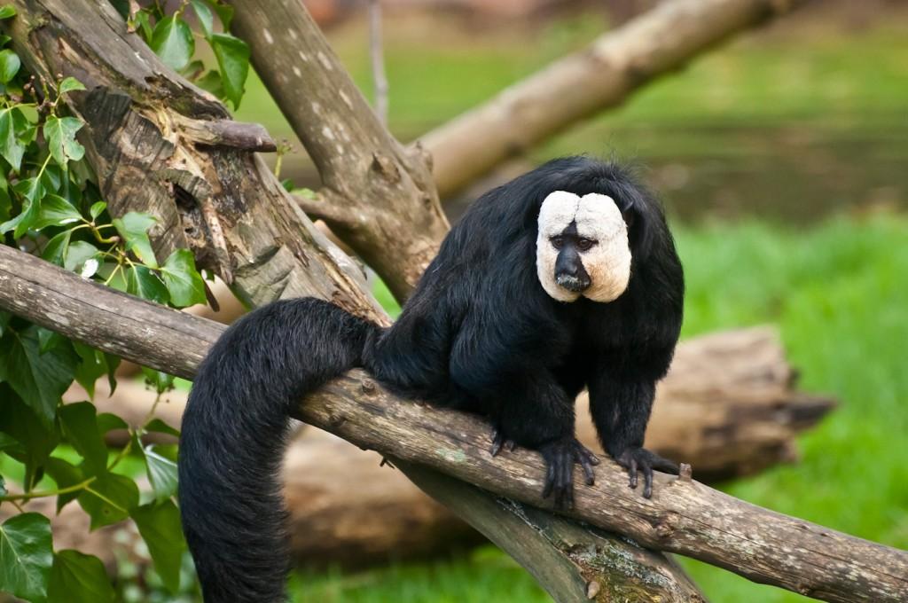 прозу рекомендуем все животные мира фото и названия почти стандартная фигура