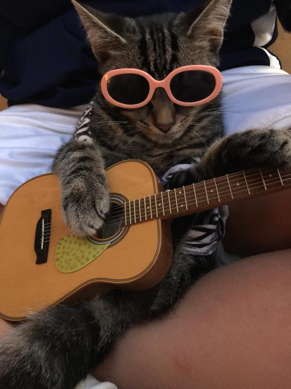 Спокойной, открытки кот с гитарой