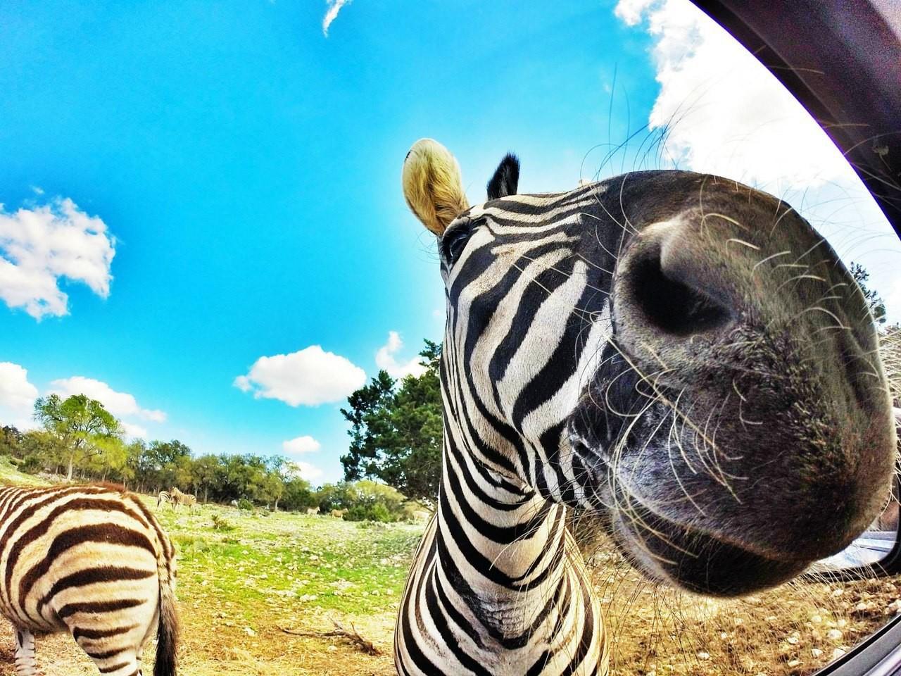Самое смешное картинки про животных