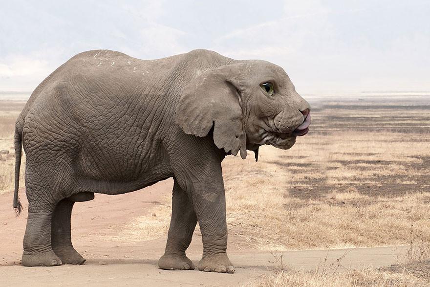 Картинки по запросу гибриды животных