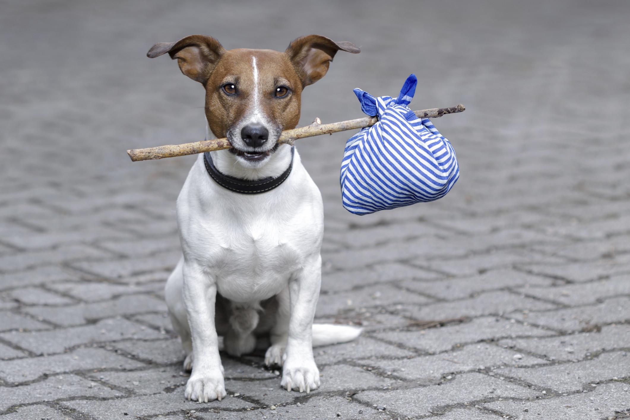 картинки с уходящей собакой