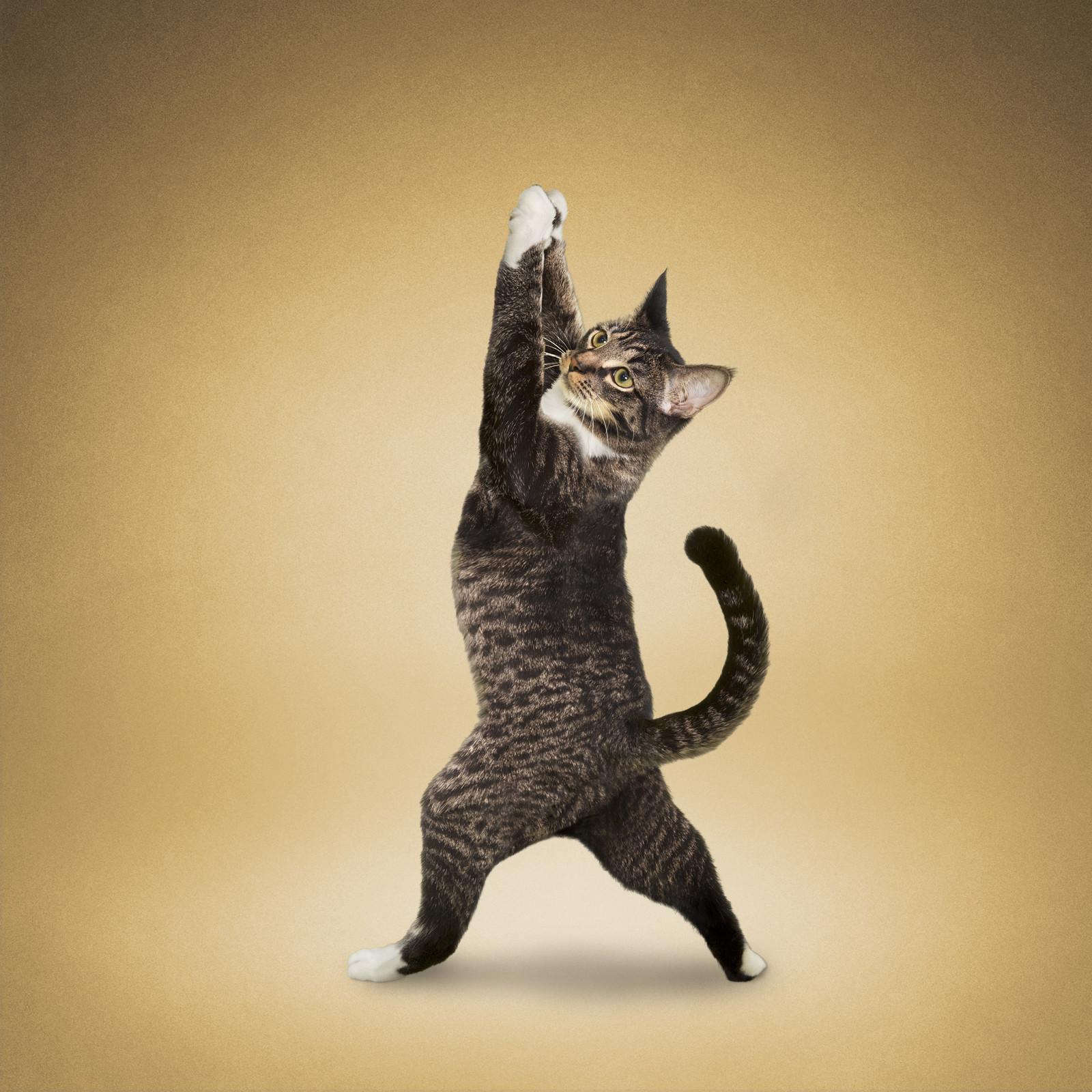йога и животные фото картинках февраля, календарь