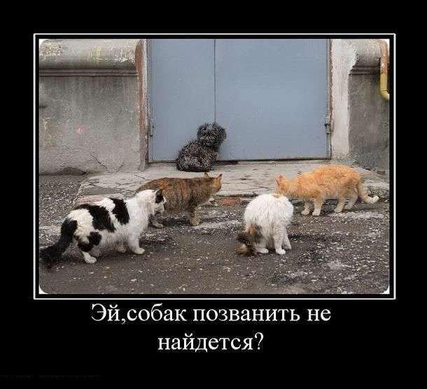 Демотиваторы собака и кот