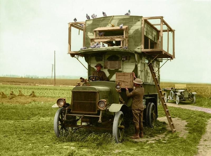 Мобильный пункт голубиной связи во время Первой мировой войны: интересные, история, снимки