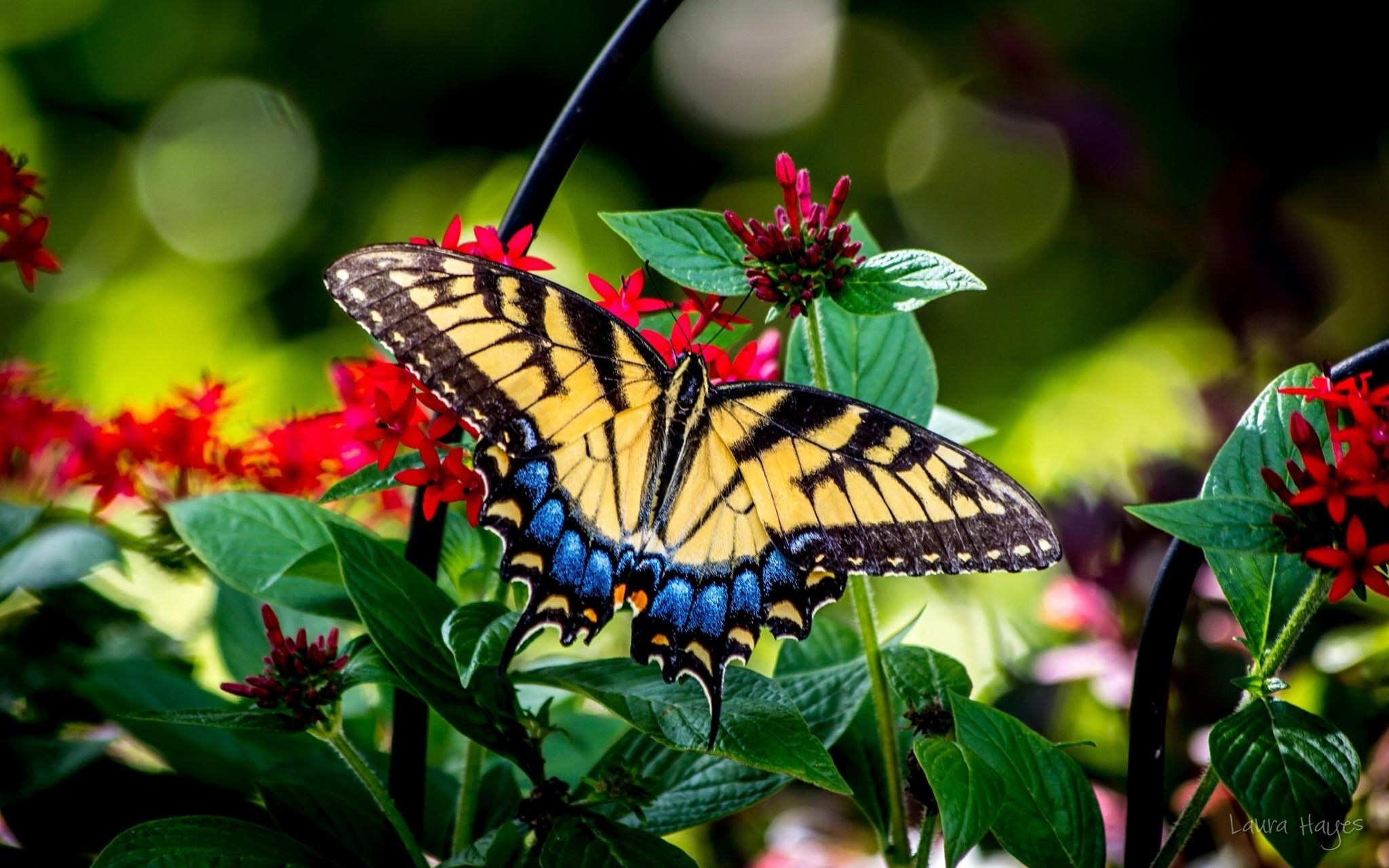 Бабочки на земле скачать