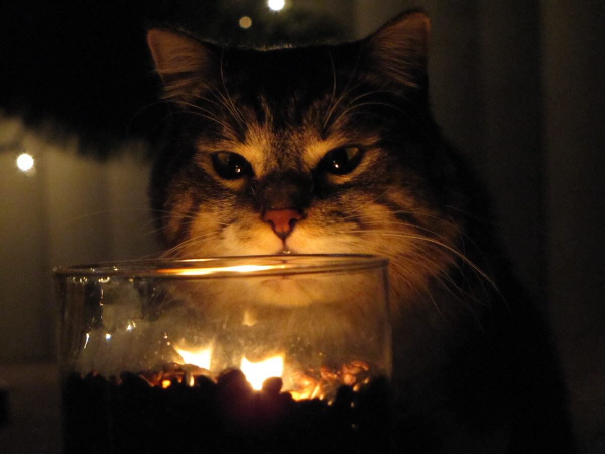 очень ламповые картинки атмосфера котики самом деле