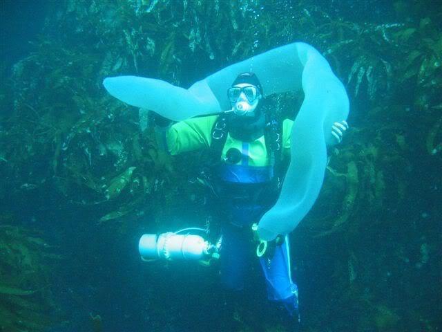 Пиросомы – одни из самых странных обитателей подводного мира Пиросомы, подводный мир