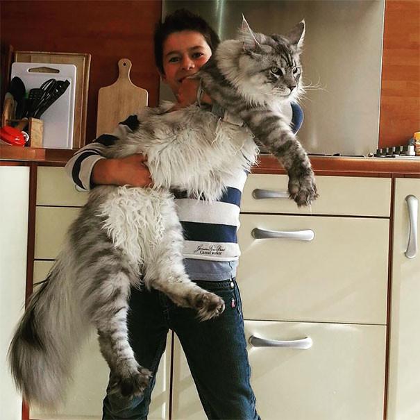 кун кот