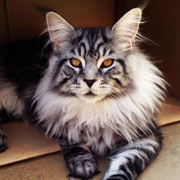 кошки куны фото