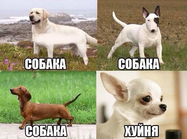 Картинка с надписями хочу собаку, тебя