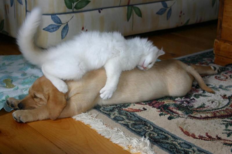 Вот что значит подобный сон: добрый день, я увидела сегодня во сне множество котят: более того, благодаря этому происшествию у вас, если можно так выразиться, откроется второе дыхание в нелегкой борьбе, и в результате все подойдет к своему логичному, а главное счастливому для вас финалу.