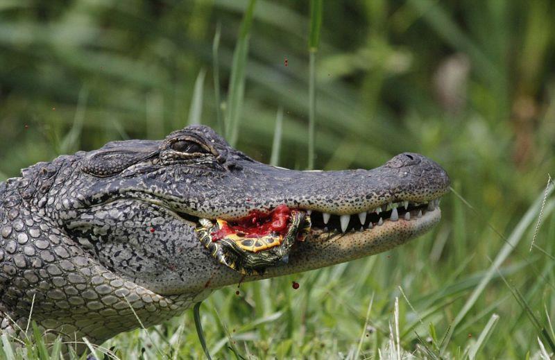 картинки крокодилов и змей сочные