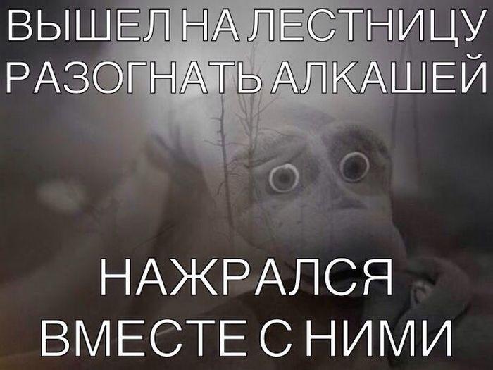 http://cdn.fishki.net/upload/post/201512/12/1772814/1415167465_podborka_97.jpg