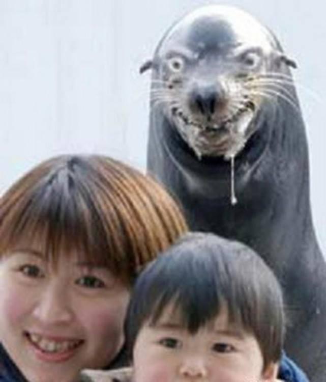 25 фотографий, в которых не должно было быть животных