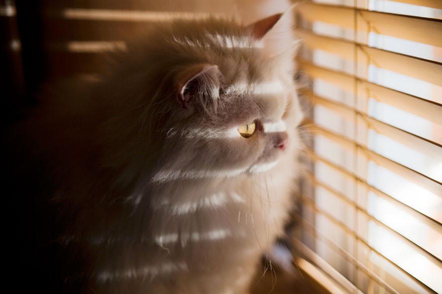 пространстве картинки ждущих котов окна двери