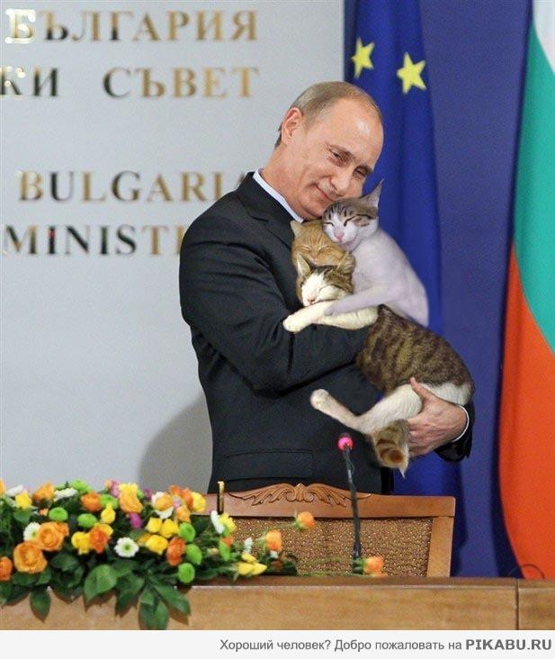 с днем россии коты данного крепления наличие