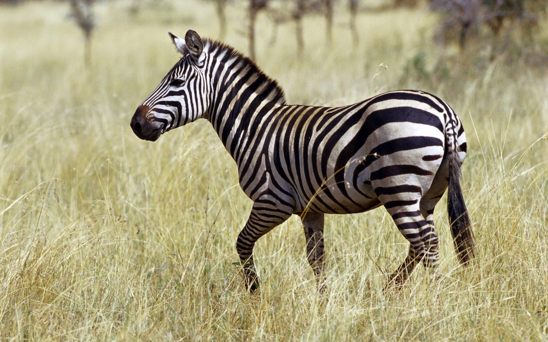 Тварини африки картинка