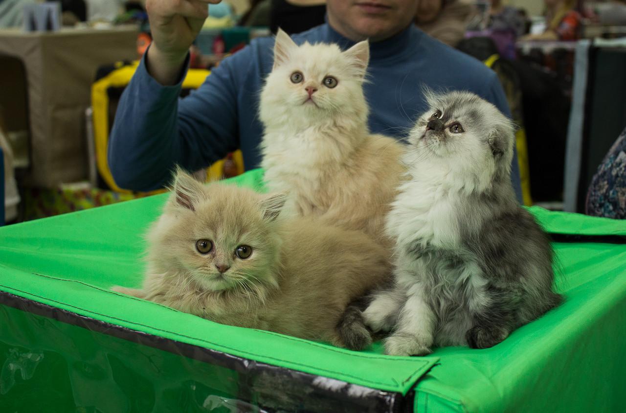 Выставка кошек и собак