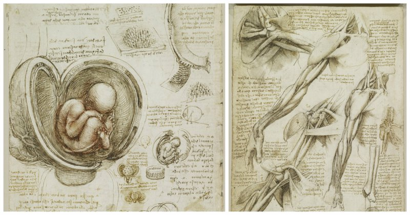 renaissance science drawings - 620×387