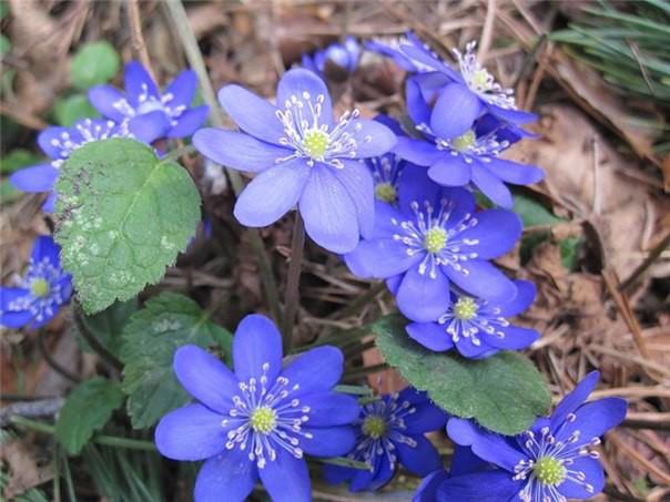 19 апреля отмечается – весенний праздник — День подснежника!  весна, подснежники., цветы
