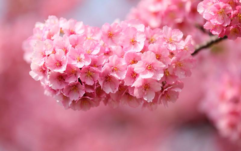Картинки на рабочий стол на весь экран цветы самые красивые живые обои тюльпаны