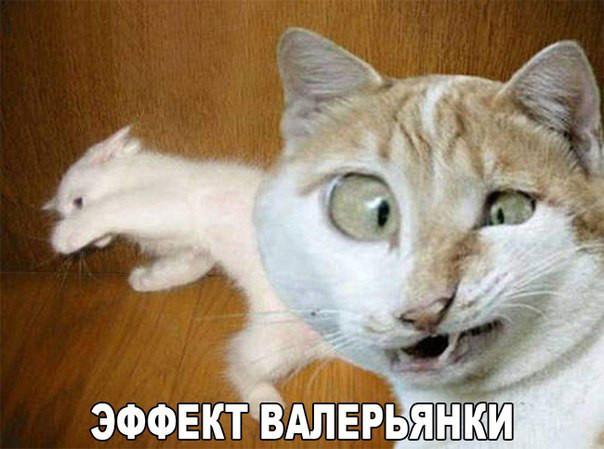 приколами картинки котами с с и