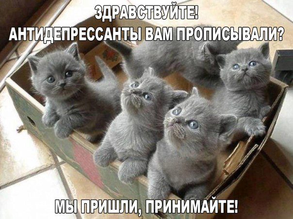 Фото приколы со смешными котами и кошками