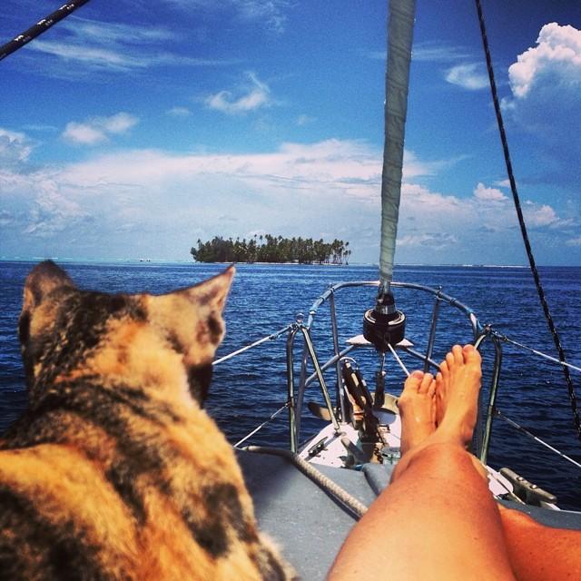 на лодке с кошками