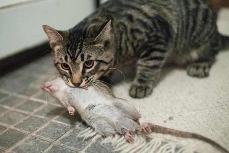 cat device