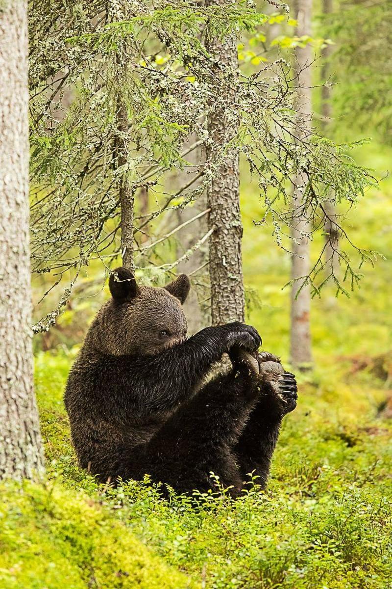 Картинки с добрым утром медведь