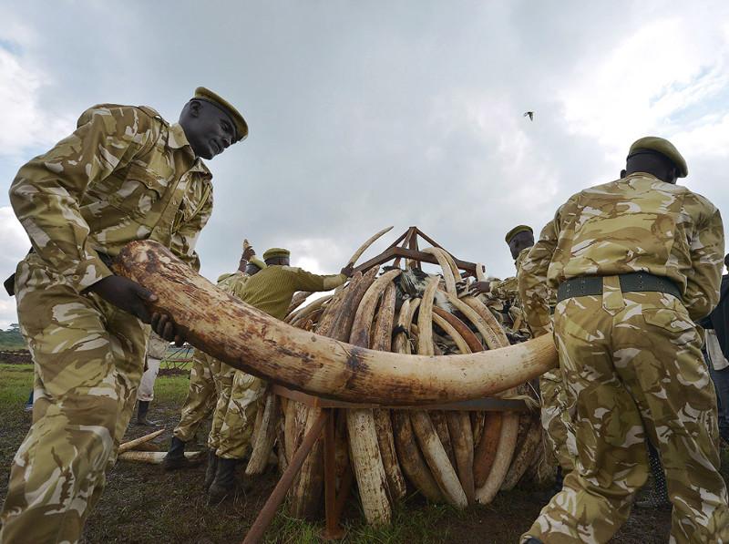 Кладбище слоновой кости   кость, слон