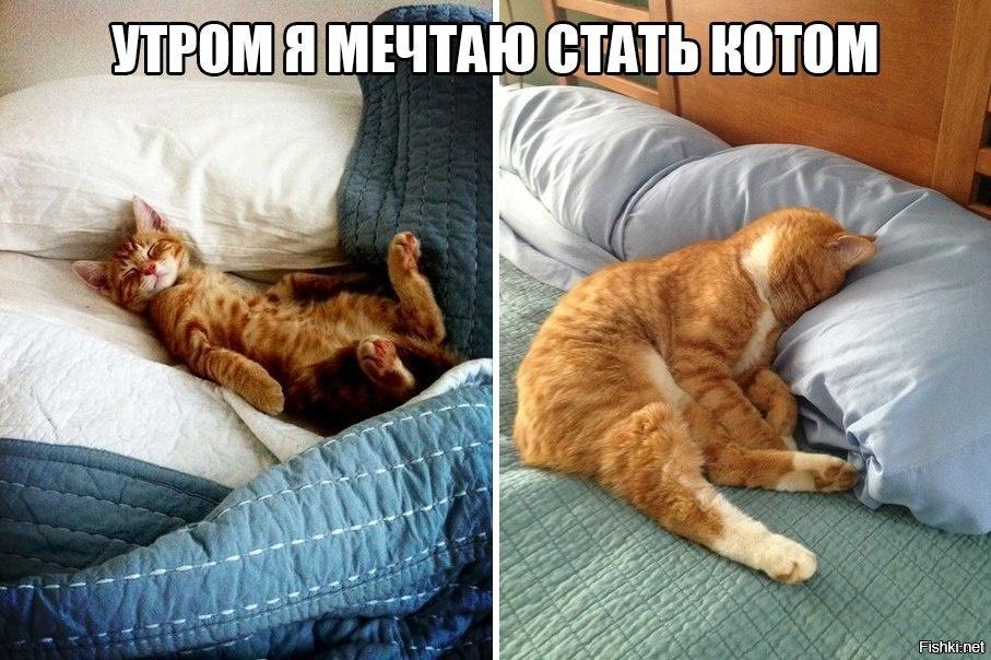 доброе утро кошки картинки приколы качестве вкусового
