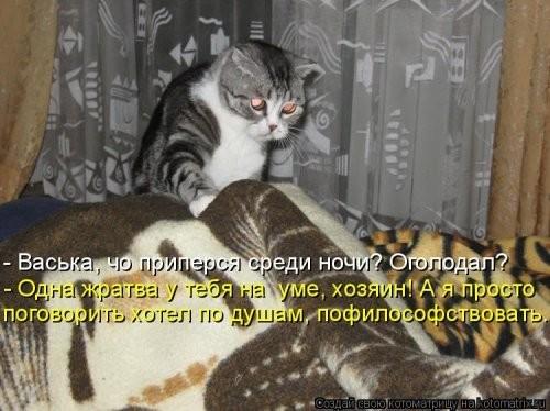 Рейхом называлась когда кошки рано утпом мяучат защищающие влажности пропускающие