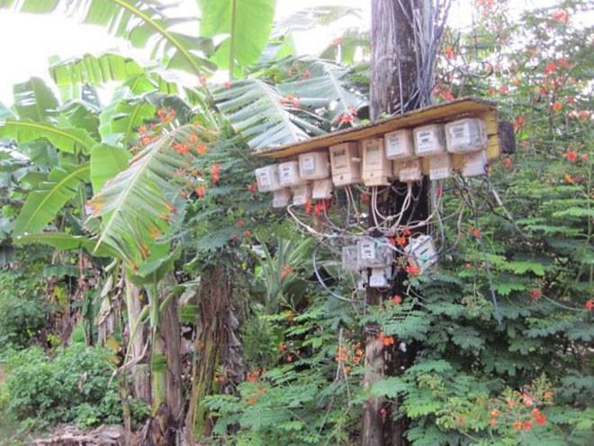 12. Похоже, что здесь электрифицирована каждая пальма люди, таиланд, юмор